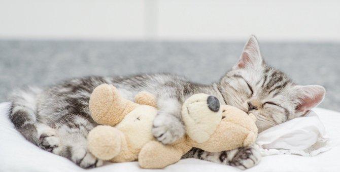 猫にとって『NGな寝床』とは?意外と危険な3つの環境