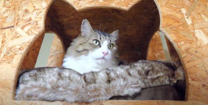 猫ちゃんがもうひとり?そっくりなクッションの上でくつろぐ猫ちゃん♪