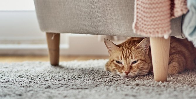猫の危険な『ストレス行動』3つ!早めにすべき対策とは?