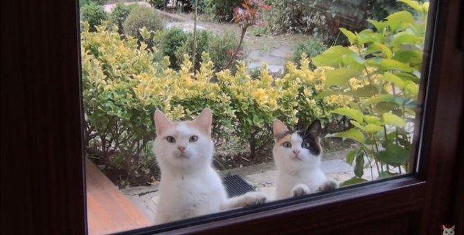 これぞ猫!お腹が空くと現れるひょっこりにゃん