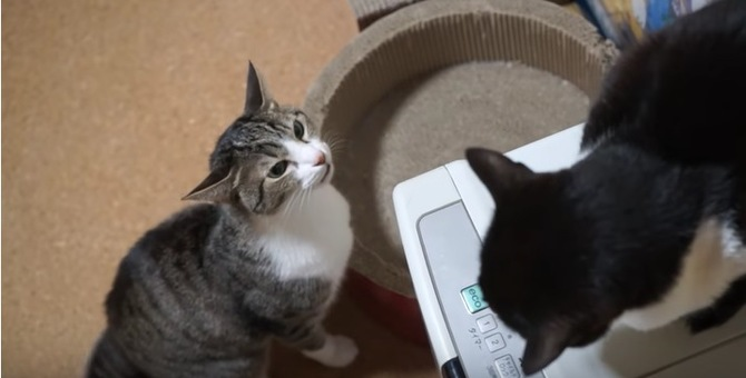 【女の戦い】猫同士の睨み合い…結末はいかに…!