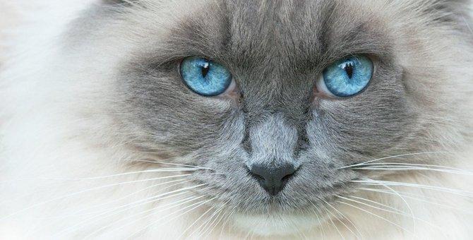 猫の白目が見えるのは大丈夫?目の不思議