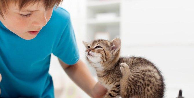 猫の疥癬の症状と予防法