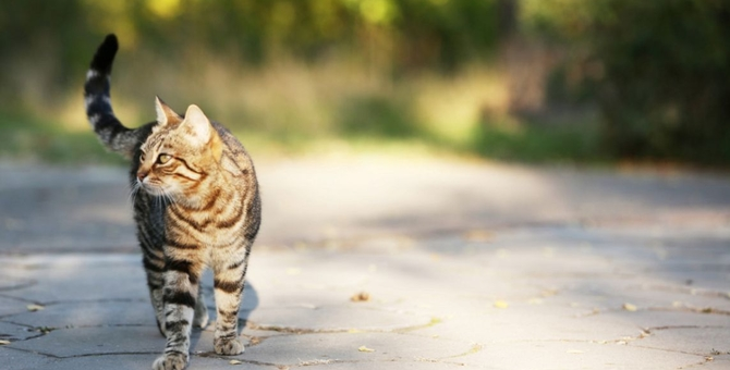 猫の行動範囲にかかわる要素とお出かけの理由
