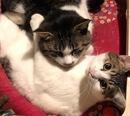 近所で見かける猫にしてあげるべきこと3つ
