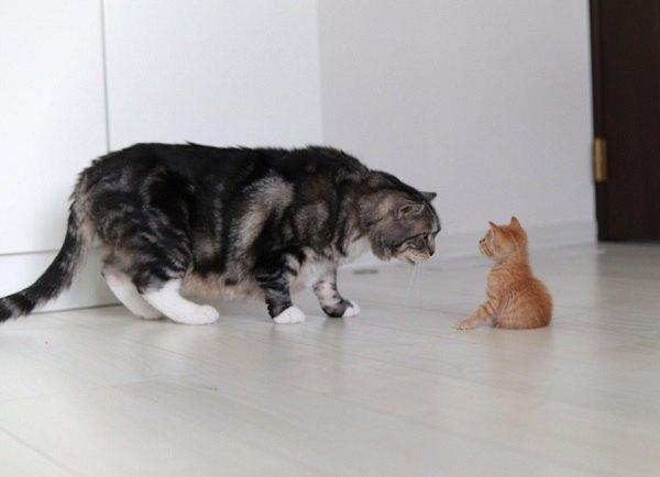 『力が欲しいか?』新入り子猫と先住猫の秘密の会話が話題!