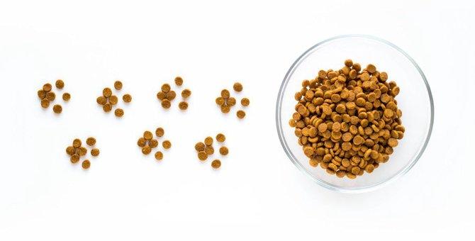 愛猫のご飯を変更するときの絶対NG行為4選!正しい手順から注意すべきポイントまで解説
