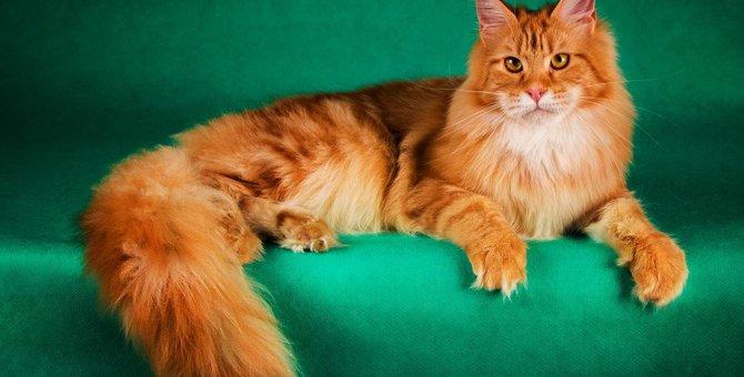 猫がもふもふなのはなぜ?種類やつけたい名前、かわいい動画も!