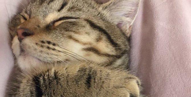 あなたの愛猫の睡眠は大丈夫?6つのチェック項目