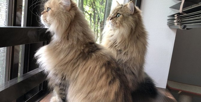 猫の『パーソナルスペース』とは?注意すべきこと3つ