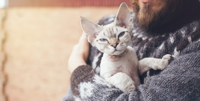 猫が飼い主の髭を食べるのはなぜ!?気持ちと対処法