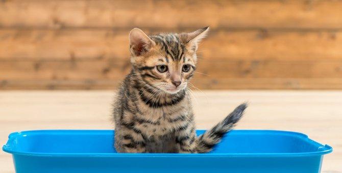 猫の飼い主を悩ませる『おしっこ』のトラブル5つ!隠れた病気が影響してるケースも?