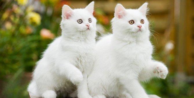 息ぴったり!シンクロしている猫たち13選