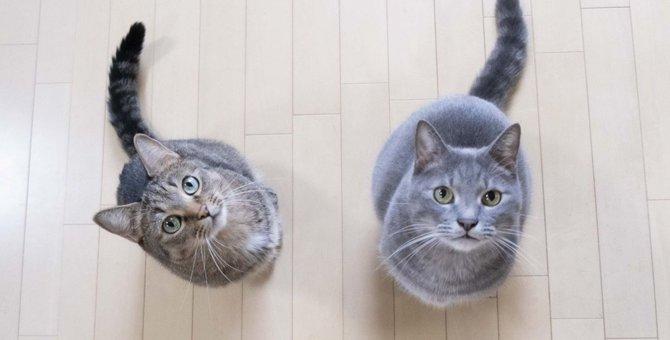 猫が『ボーッと宙を見る』3つのワケ