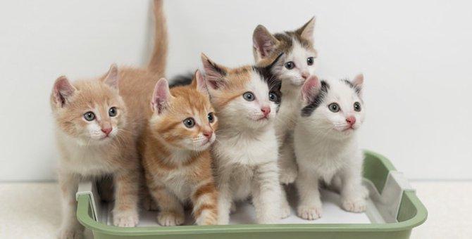 猫用トイレのおすすめ10選!種類別の選び方