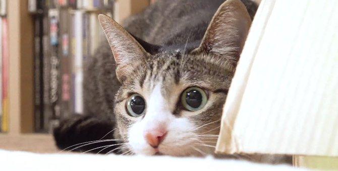 オモチャを前に荒ぶる猫さん