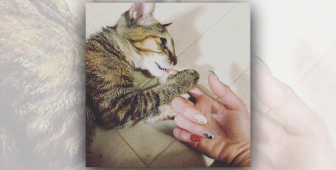 タイムリミットはあと数日…危険な場所で暮らす子猫が見つけた永遠のお家