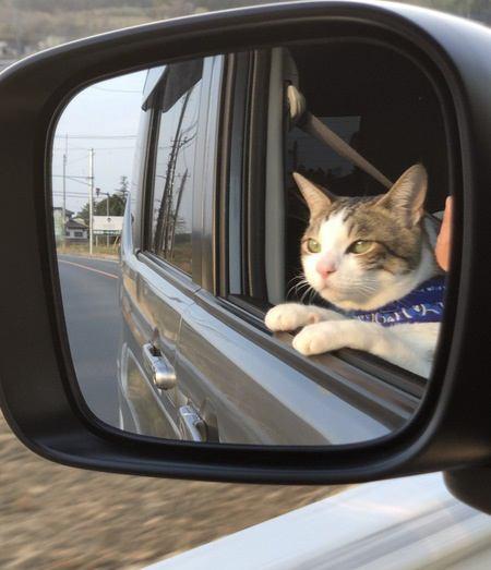 猫と一緒に車に乗る時の注意点6つ