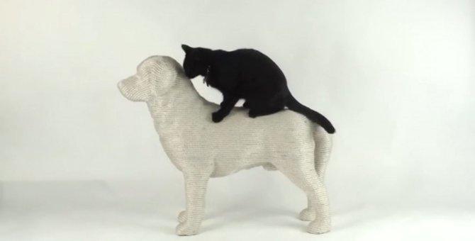犬と猫の仲にお困りのあなた、良いものがありますよ