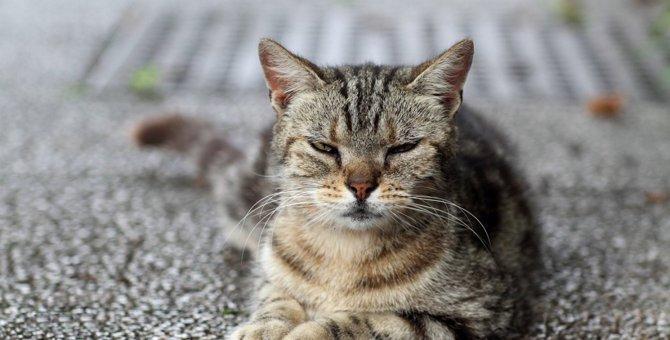 猫が不満を隠している時の態度5つ