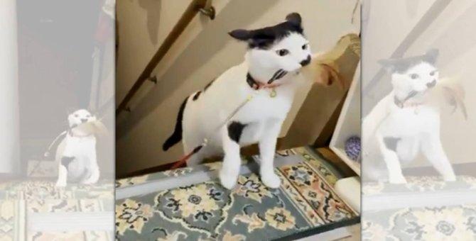 「獲物を仕留めました!」誇らしげに登場の猫さんがカッコイイと話題