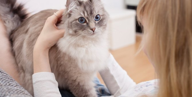 猫が飼い主にふみふみする6つの気持ち