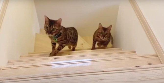 パパさんの後に続けー!階段を走る猫さんたち!