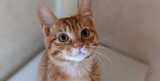 『フレンドリーな猫』がよくする5つの行動