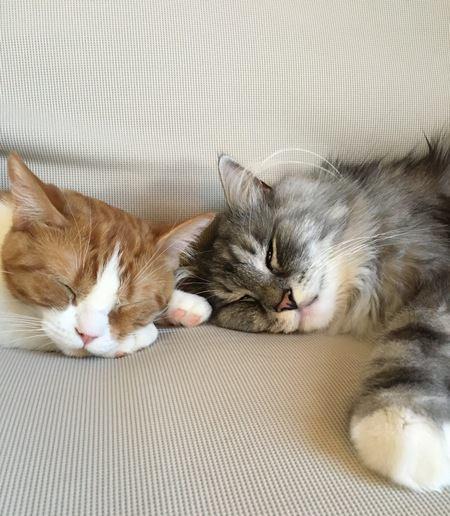 猫は『今日だれと寝るか』を考えている?