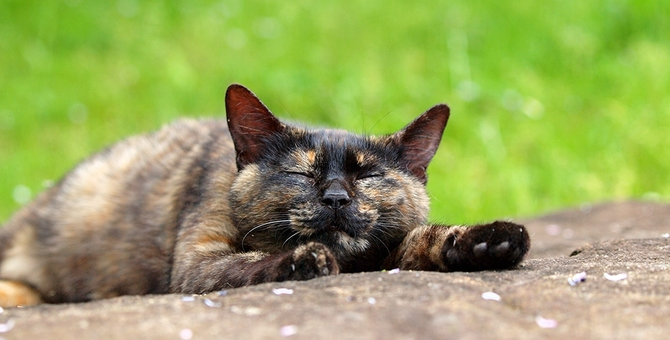 サビ猫について ~性格や特徴~