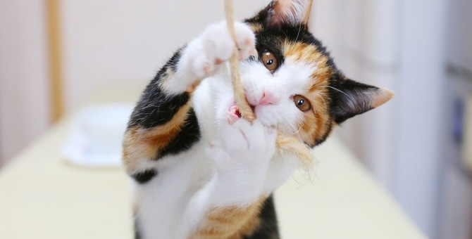 猫が下痢をしていて吐く!考えられる病気