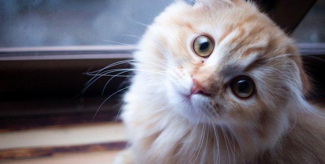 『愛情不足の猫』がする行動4選!絶対見逃しちゃダメなサインとは?