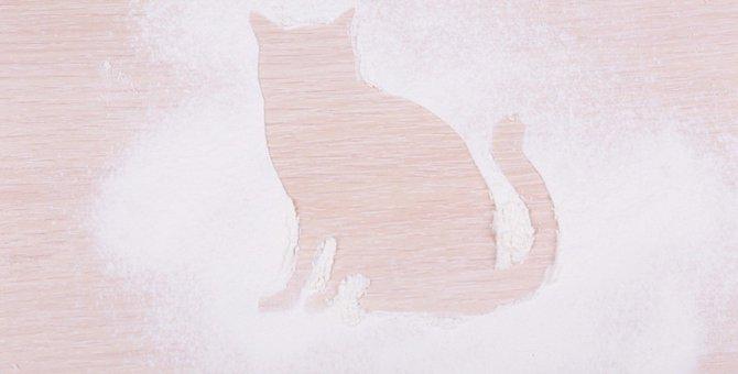 猫にベビーパウダーは使っても大丈夫?知らなかった3つの活用術