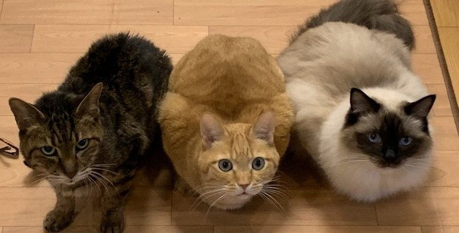 猫が玄関から離れないときの心理5つ