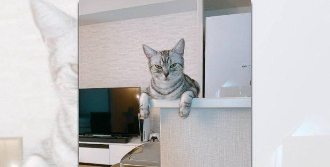 猫社長の監視が厳しい「テレワーク」環境推奨?!各企業がざわつく