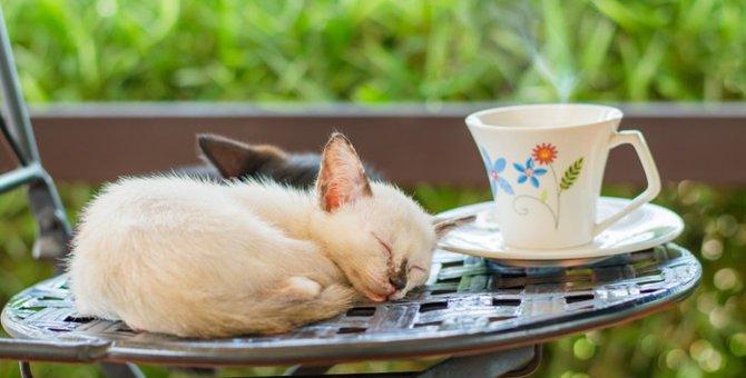 子猫が寝る時間はどれぐらい必要?あまり寝ない時の対処法