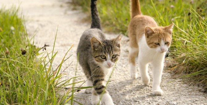 靴下猫のバリエーションと足が白い理由