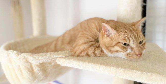 LAYLAの12猫占い【10/12~10/18】のあなたと猫ちゃんの運勢