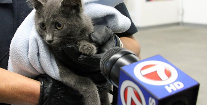 「トンネル内に子猫がいる‼」複数のドライバー達の通報で救助活動が開始