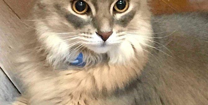 猫がトイレじゃない所で粗相する4つの理由と対策