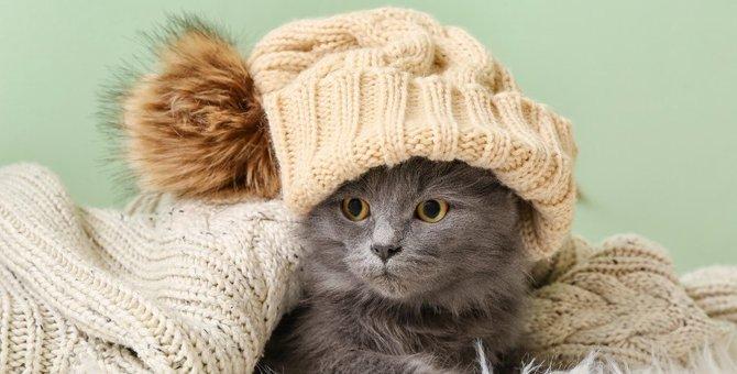 猫が洋服をとても嫌がる4つの理由
