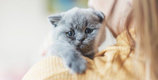 猫を不幸にしてしまう飼い主のパターン5つ