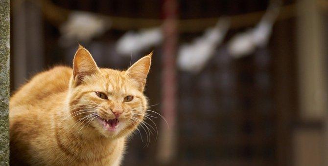 猫が唸る4つの理由とその時の対処法