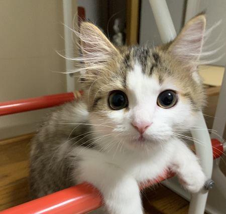 猫の飼い主だけが理解できる『5つのこと』