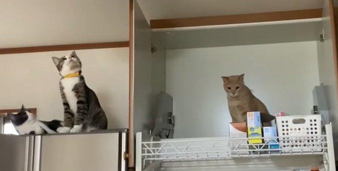 猫ちゃんは一体どうやってこの場所に?