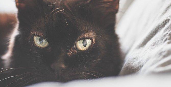 猫の癌とは?症状から治療の方法、その余命について