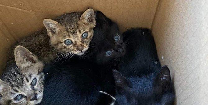 山に捨てられた4匹の子猫を保護。無責任な通報…でも里親につながれ!