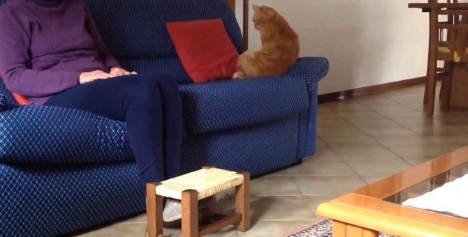 素直に甘えるのが照れくさい猫ちゃん