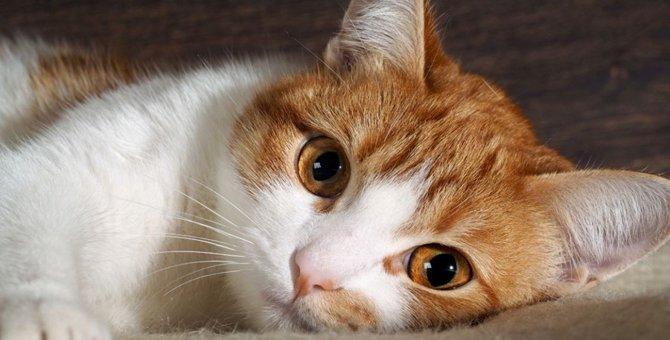 電気代で猫を救う!?ネコ電気とは?