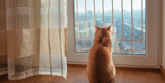 猫を構わない方がいい7つのタイミング